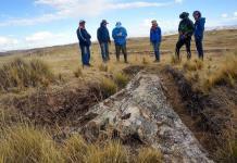 Un árbol fósil reconfigura paisaje de los Andes de hace 10 millones de años