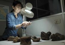 Un prehistórico perezoso gigante único en el mundo sorprende a la ciencia