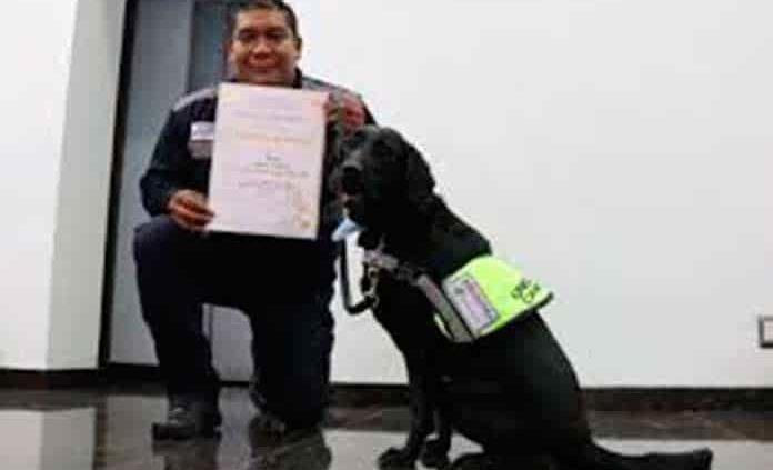 Adiestran unidad canina para detectar droga