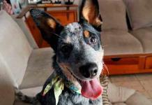 ¡Buenas noticias! Kora, la perrita extraviada tras un robo domiciliario ya fue localizada