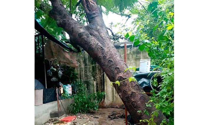 Árbol cae sobre una casa en la colonia Méndez en Ciudad Valles