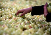Crece superávit agroalimentario