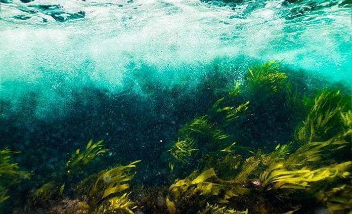 Algas marinas pueden proveer antivirales para la COVID-19, según estudio