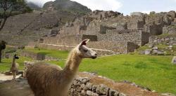 Tras siete meses en silencio, Machu Picchu reabre al turismo (FOTOS)