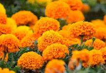Flores a los muertos