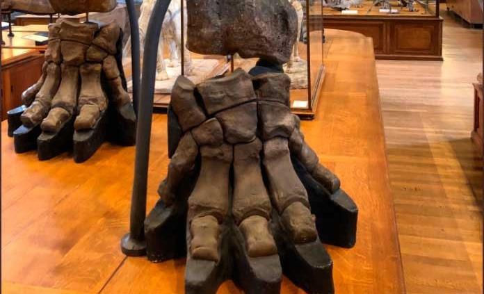 Museo de París pide donativos para restaurar un esqueleto de mamut