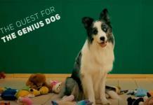 Buscan al perro más inteligente del planeta