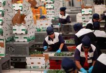 Balanza agroalimentaria de México crece 38.4%