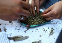 Organizaciones consideran insuficiente reforma sobre uso de marihuana