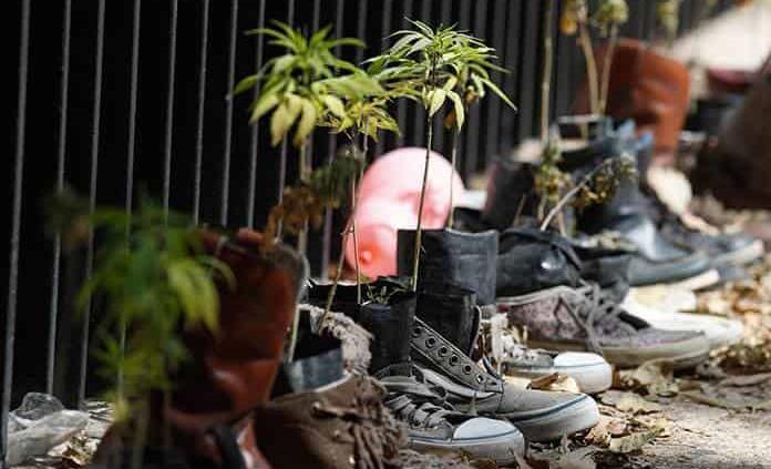 Avala Senado uso lúdico de la marihuana