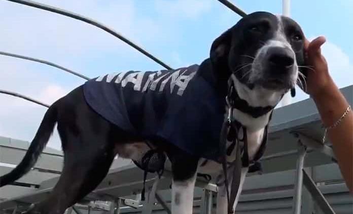Marina rescata a segundo perro de las inundaciones en Tabasco