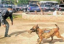 Héroes caninos vigilan Zacatecas