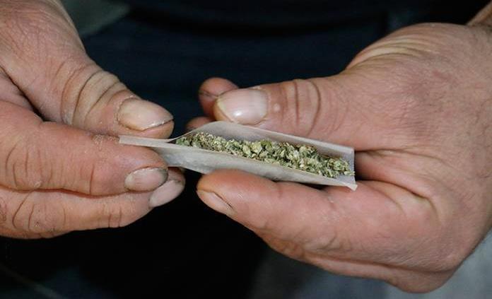 Esperan regulación sobre comercialización de cannabis para uso medicinal