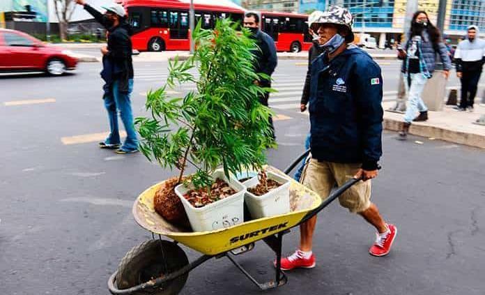 Miles en cárcel por posesión de marihuana