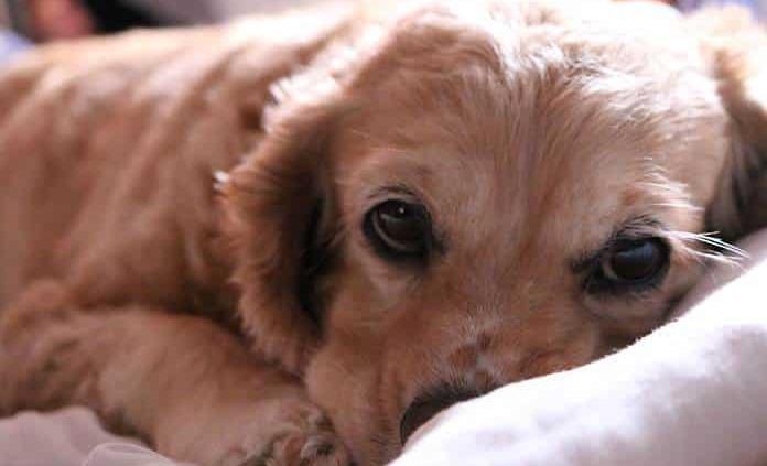 Pandemia aumentó maltrato animal
