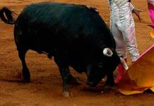 Buscan prohibir la tauromaquia en la capital poblana
