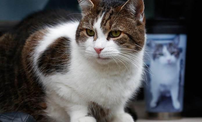 Cinco cosas que los gatos odian de las personas