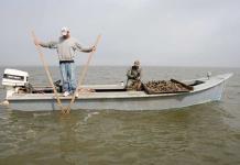 Famosas ostras de Apalachicola no volverán a la mesa de Florida hasta 2025
