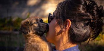 Inadecuadas, dietas veganas o crudívoras para perros y gatos (Video)