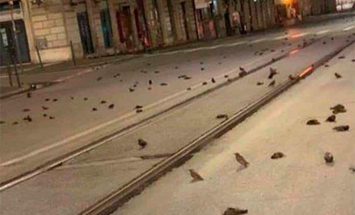 Uso de pirotecnia deja una alfombra de pájaros muertos en Roma