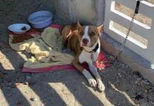 Vecino salva a  can abandonado en una vivienda