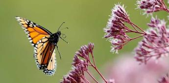 Científicos deploran disminución en población de insectos