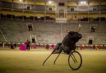 Pese a pandemia, escuelas taurinas siguen abiertas en España