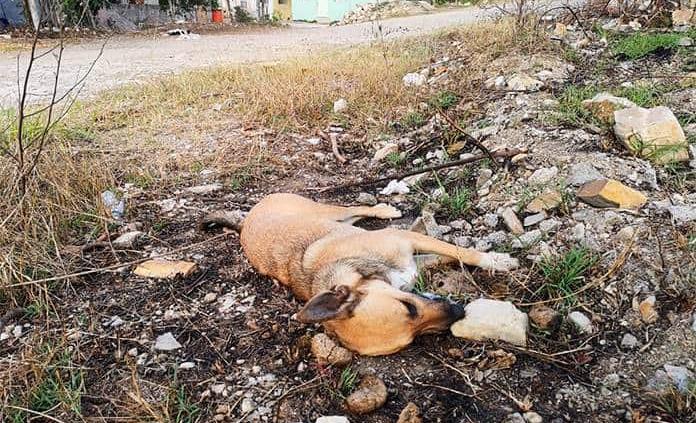 Envenenan a nueve mascotas en El Consuelo