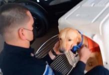 Con honores jubilan a Pluto, perro que trabajó en policía de Sonora