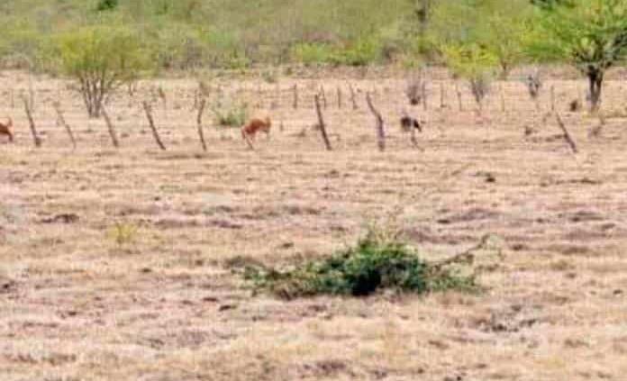 Sequía pega al campo en varias comunidades
