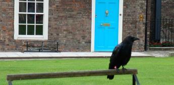 La desaparición de un cuervo de la Torre de Londres reaviva la leyenda