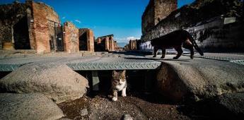 Arqueólogo alemán es nuevo director de sitio de Pompeya