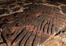 Hallan bajorrelieve con forma de águila real en Templo Mayor