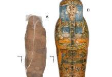 Una momia egipcia con un raro tratamiento mortuorio: un caparazón de barro