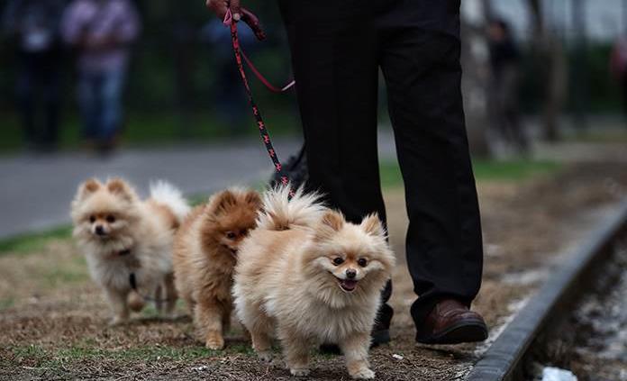 Algo bueno de la pandemia: disfrutar de la compañía de nuestro perro