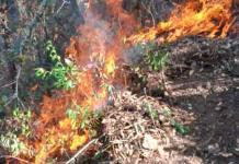 Alertan por los incendios forestales