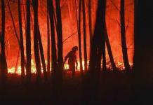 Portugal reporta gran progreso contra incendios forestales