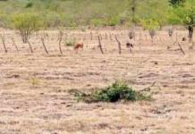 Heladas colapsan cultivos agrícolas