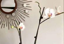 La orquídea, antes inaccesible, hoy al alcance de todos
