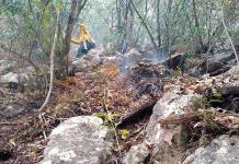 En 3 días se queman casi 34 hectáreas en la sierra de Tamasopo