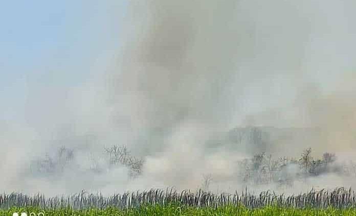 Incendio de La Hincada llega a Tamasopo