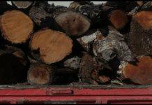 Detienen a 3 por transportar ilegalmente madera de especie protegida y a un hombre que ofreció $30 mil por su liberación