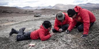 Hallan un nuevo mamífero de la era de los dinosaurios en la Patagonia Chilena