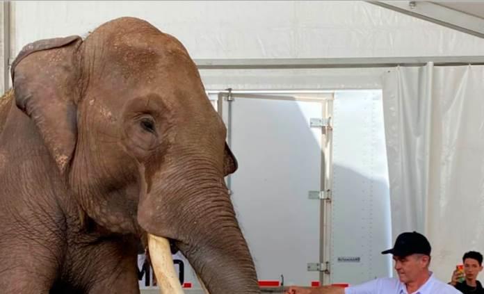 Elefante rescatado en Jalisco llega a resguardo en Culiacán
