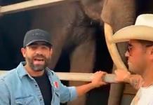 Acusan a Arturo Islas de armar circo en rescate de elefante Big Boy (VIDEO)