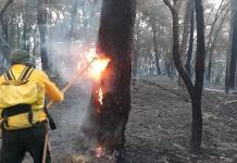 Culpan a los campesinos de incendios forestales