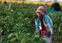 Laboran 801,327 niños en México
