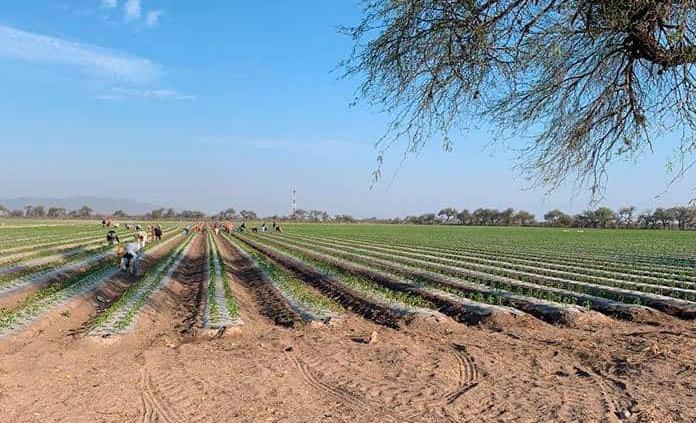 Analiza Gobierno solicitar declaratoria de desastre por sequía