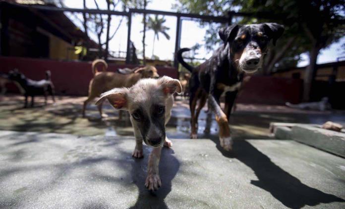 Centro de rescate teme que cientos de perros vuelvan a las calles en Managua