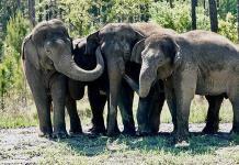 Santuario de Florida empieza a recibir elefantes de circo